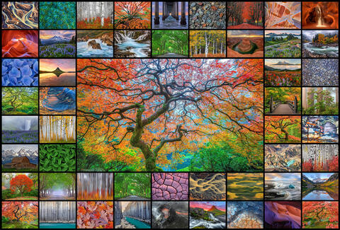 Ten Most Influential Nature Photographers Of All Time