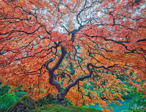 Peter Lik Photography Tree of Life? Not Exactly