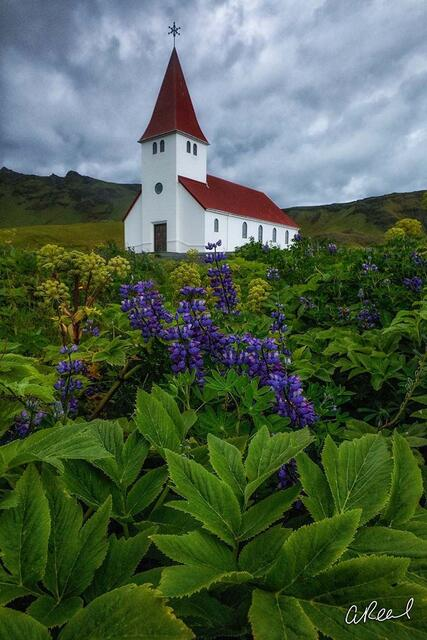Vik, Iceland, Church, Lupine, Limited Edition, Fine Art,