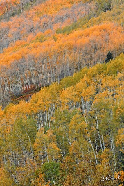 Aspen, Trees, Colorado, Fine Art, Limited Edition, Abstract, Happy, Mountains, Continental Divide