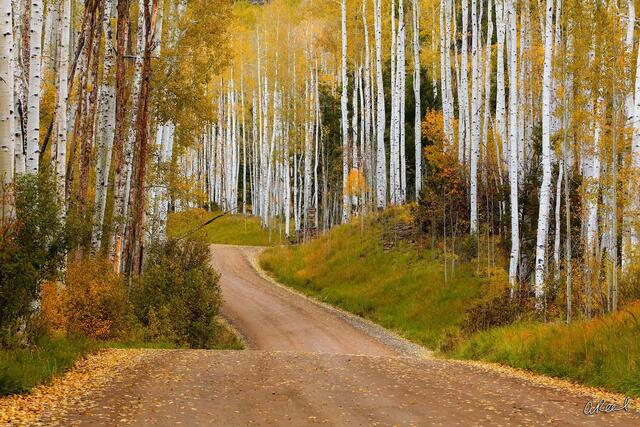 Telluride, Colorado, Aspen, Trees, Autumn, Fall Color, Fine Art, Limited Edition