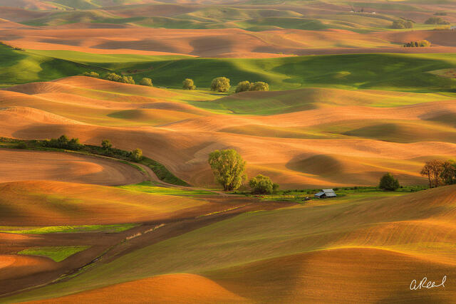 Palouse, Washington, Colfax, Steptoe