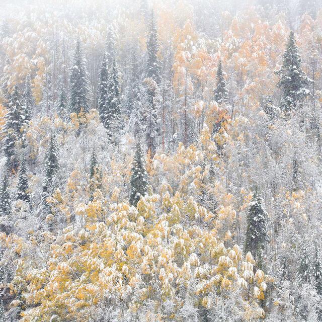 Winters Vail FujiFlex