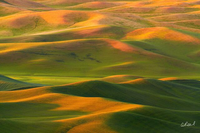 Washington, Fields, Wheat, Harvest, Palouse,