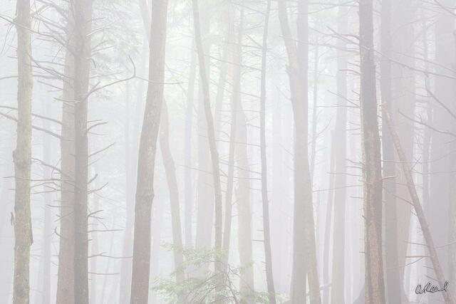 Fog, Trees, Hush, Fine Art, Limited Edition,