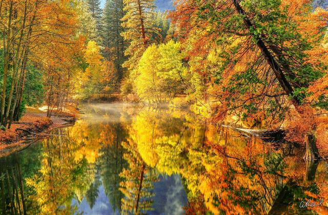 A photograph of golden trees in autumn reflected in a slow moving river.