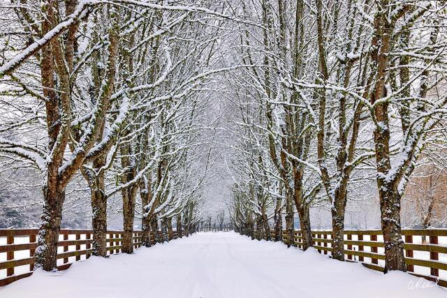 A photograph of a long tree lined driveway covered in snow.