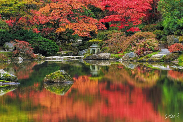 Seattle Japanese garden during fall reflected in a pond in Seattle, Washington.