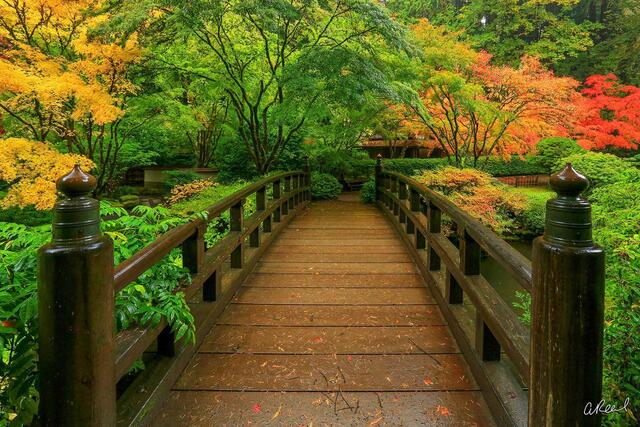 A photograph of a wooden bridge in autumn.