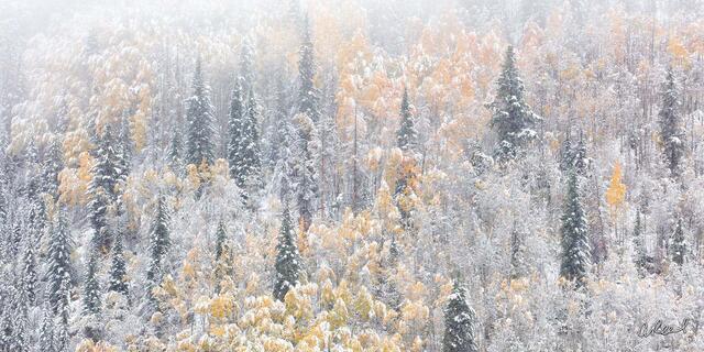 Winters Vail Panoramic