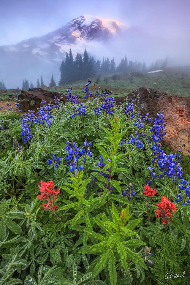 Rainier, Mountain, Wildflowers, Paradise, Mt Rainier, National Park, Fine Art, Limited Edition,