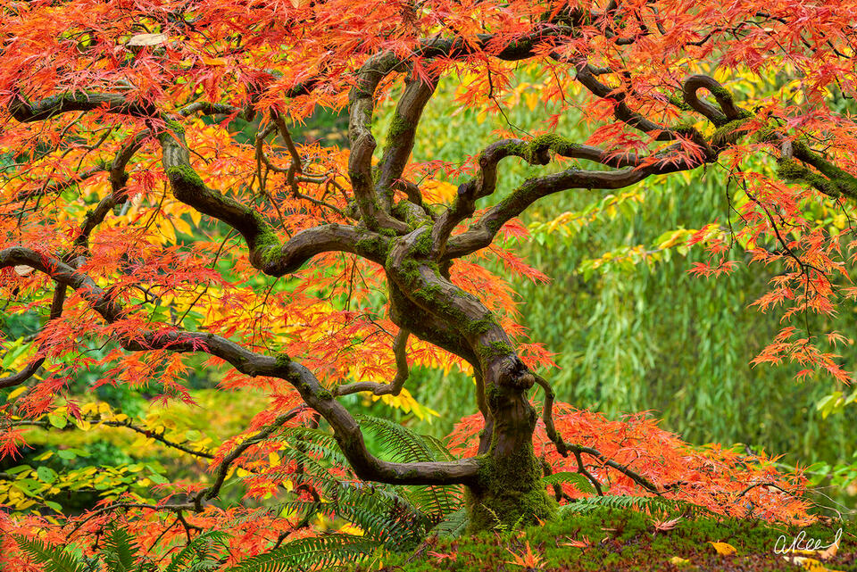 Tree, Portland, garden, Fall, Autumn