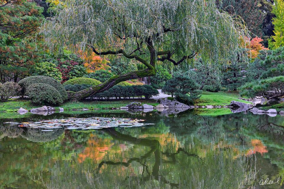 Seattle Japanese Garden, Determination, Struggle, Fine Art, Limited Edition,