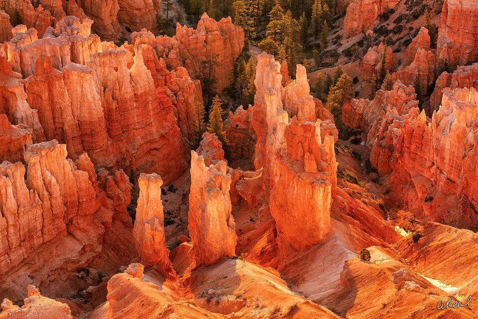 Bryce Canyon, Rock, Red, White, Park, National Park, Fine Art, Limited Edition, Utah,