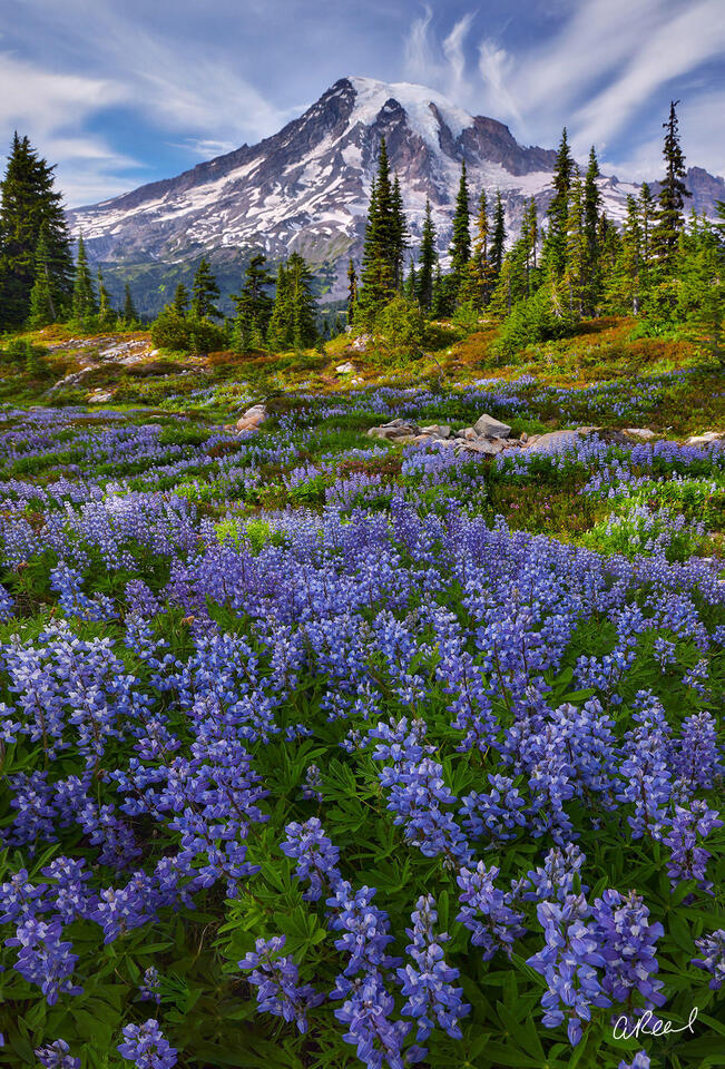 Mt Rainier, Lupine, Evergreens, Washington, Fine Art, Limited Edition, Clouds