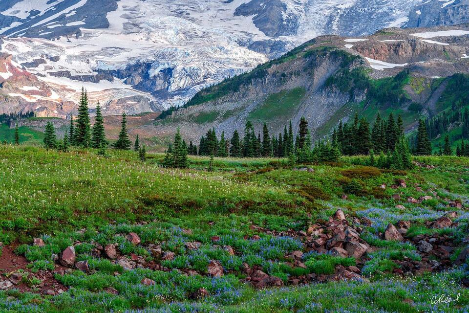 Paradise, rainier, National Park