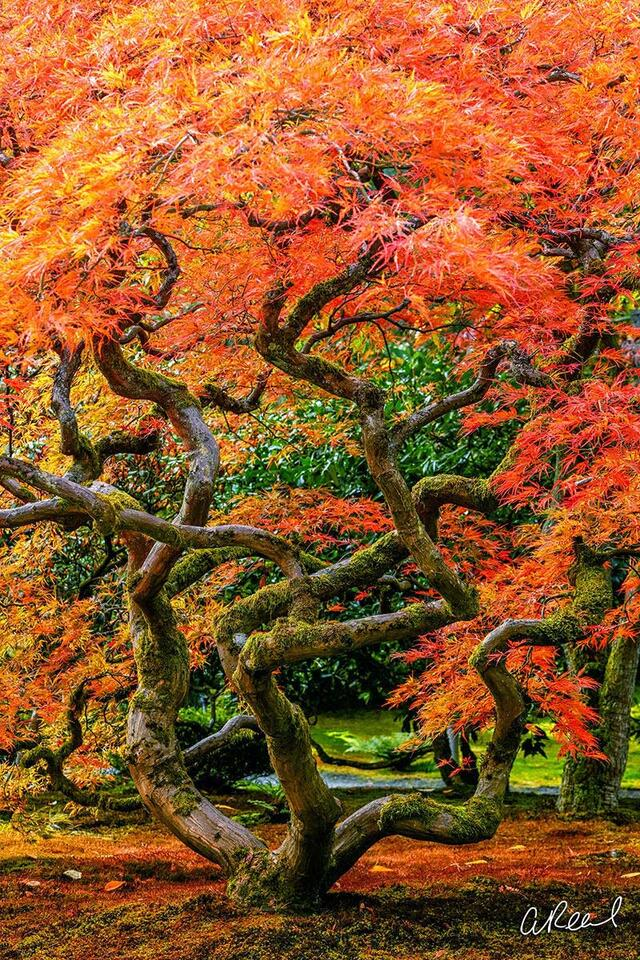 Fine Art, Limited Edition, Seattle, Japanese, Garden, Tree, Medusa, Plants, Structures,