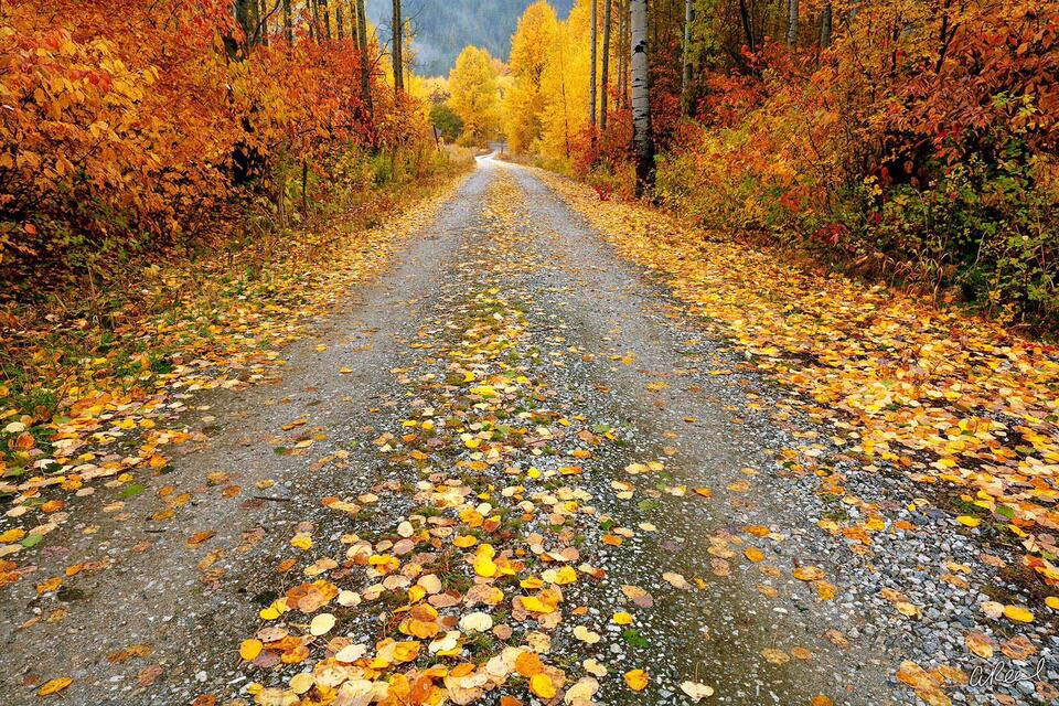 Fine Art, Limited Edition, Road, Glory, Autumn, Fall, Leavenworth, Washington, Leaves, Fallen, Road, Perspective,