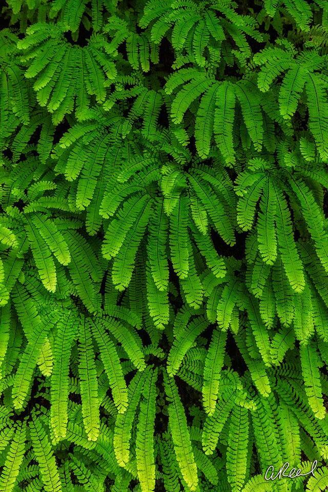 Fern, Art, Abstract, Fine Art, Limited Edition, Wachella, Falls, Oregon,