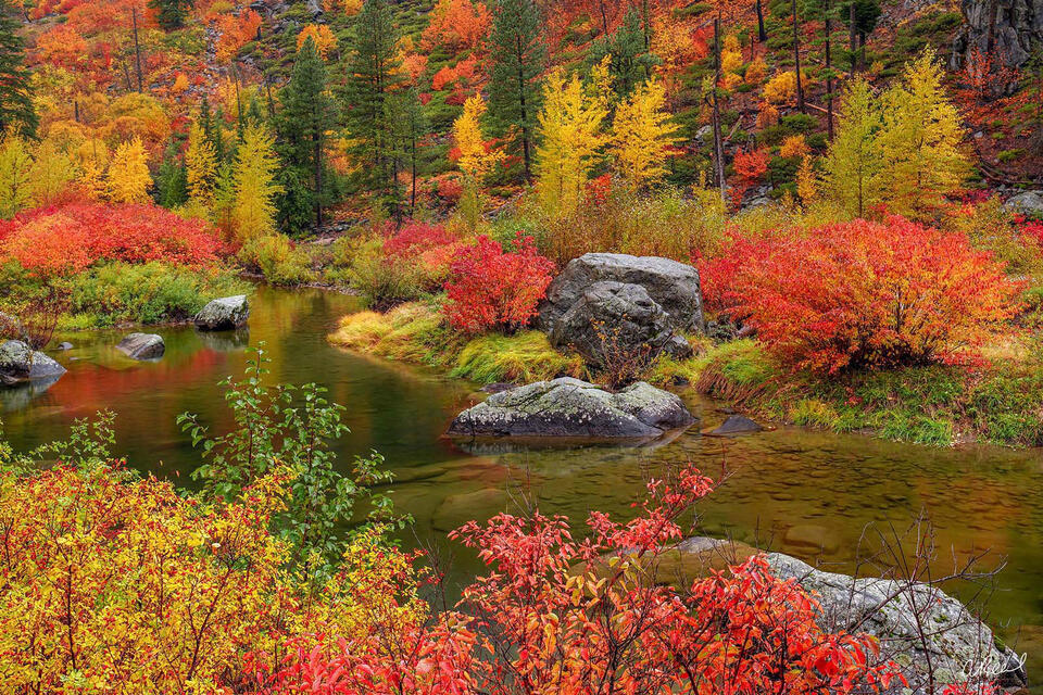A still pond surrounded by red, green and yellow plants and shrubs during autumn.