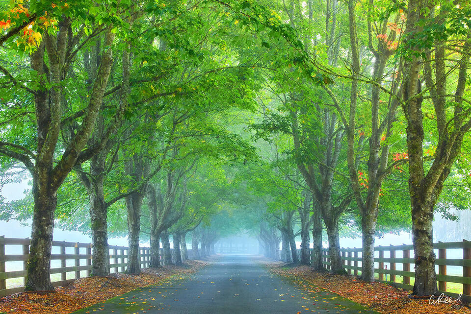 A photograph of a long driveway surrounded by trees in the spring with a thick blanket of fog.