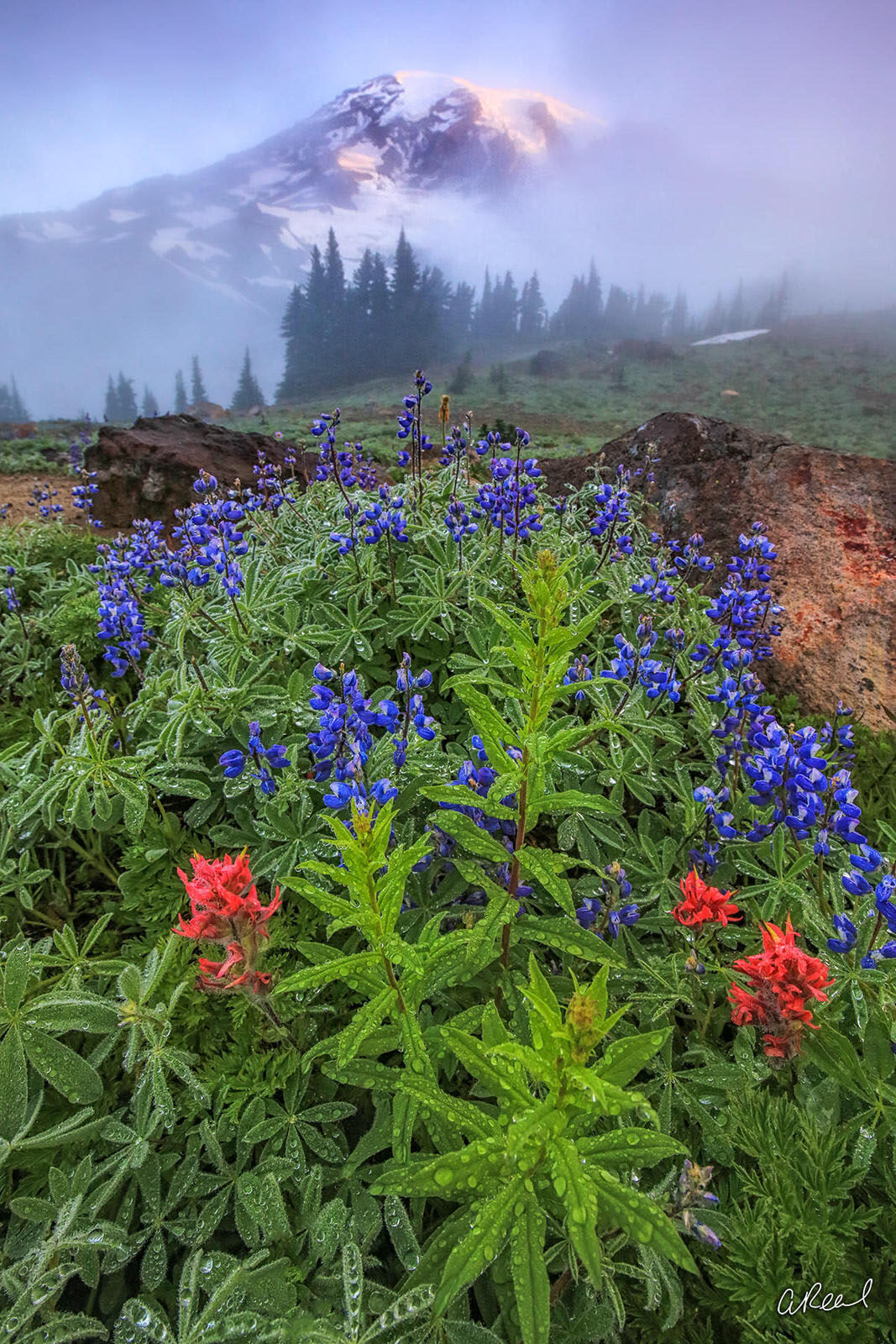 Rainier, Mountain, Wildflowers, Paradise, Mt Rainier, National Park, Fine Art, Limited Edition, , photo