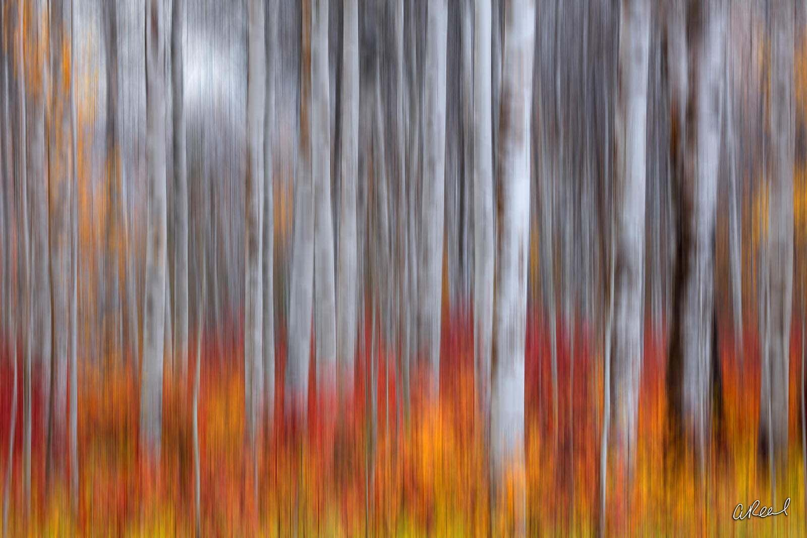 ICM, Image, Creative, Artistic, Leavenworth, Washington, Movement, Fine Art, Limited Edition, abstract , photo