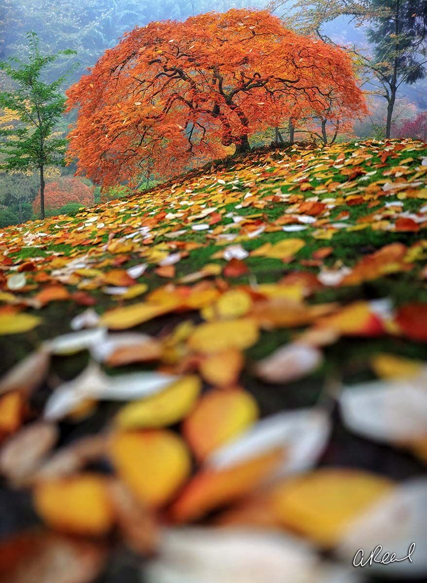 Fine Art, Limited Edition, Autumn, Fall, Leaves, Seasons, Portland, Oregon, photo