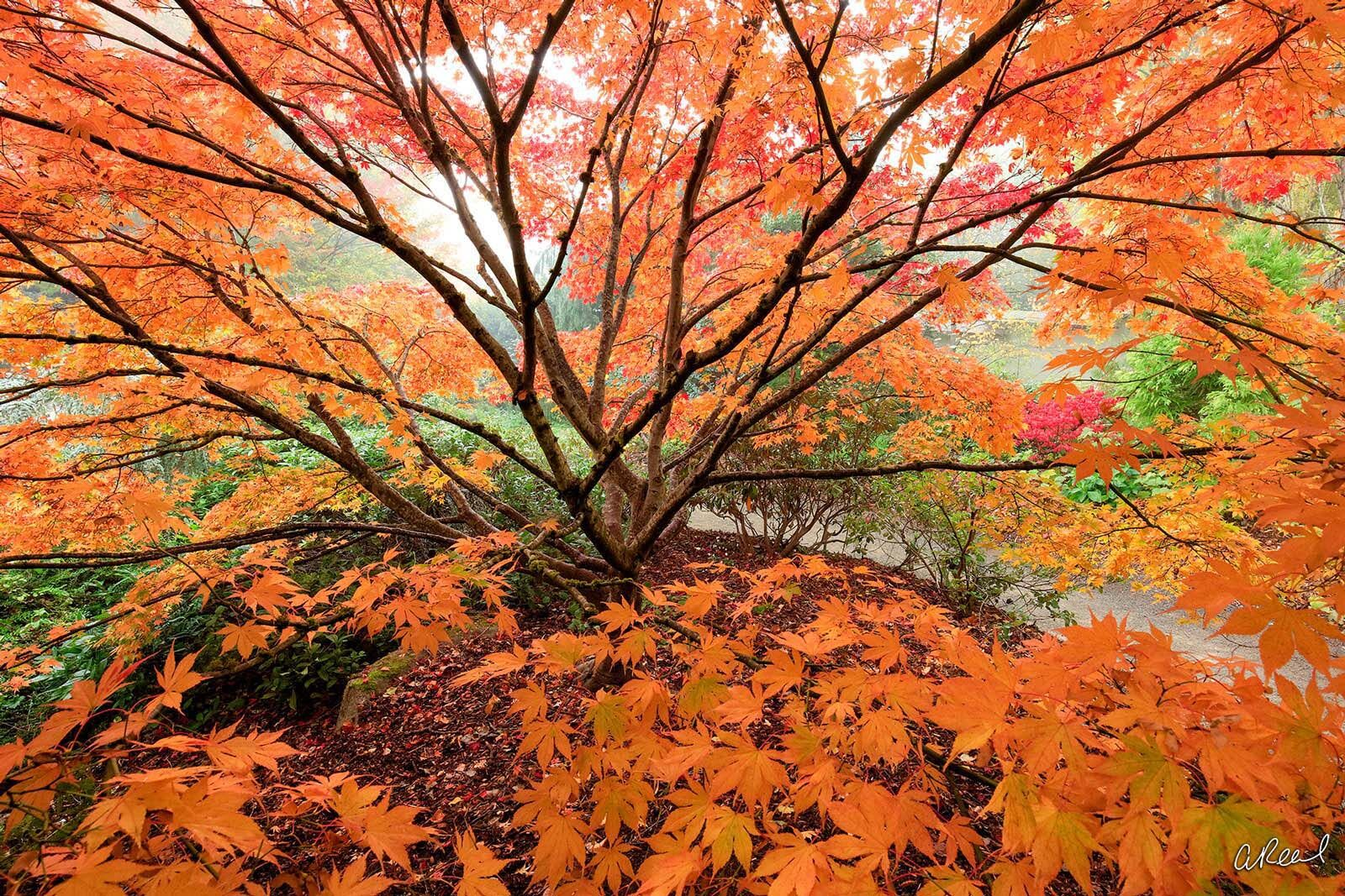 Fall, Autumn, Summer, Leaves, Seattle, Washington, Garden, Fine Art, Limited Edition, photo
