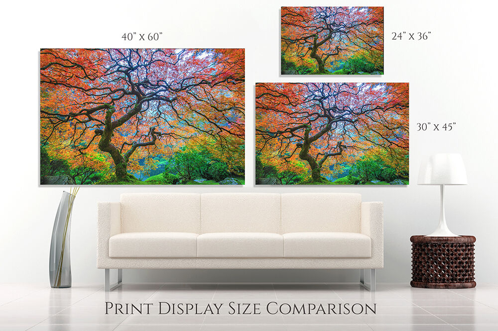 Aaron Reed Print Size Comparison
