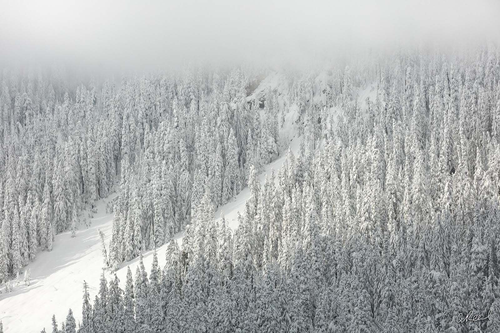 Fine Art, Limited Edition, Snow, Winter, Seattle, Snoqualmie, Pass, Washington, photo