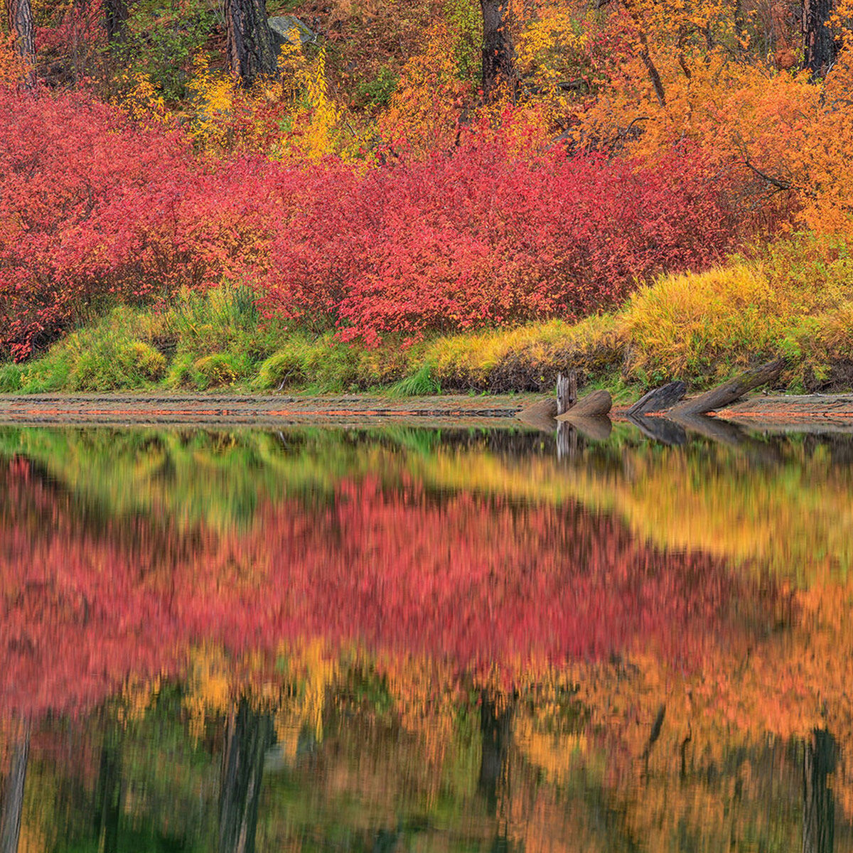 A fine art photograph of reflected autumn colors titled Mirrors.
