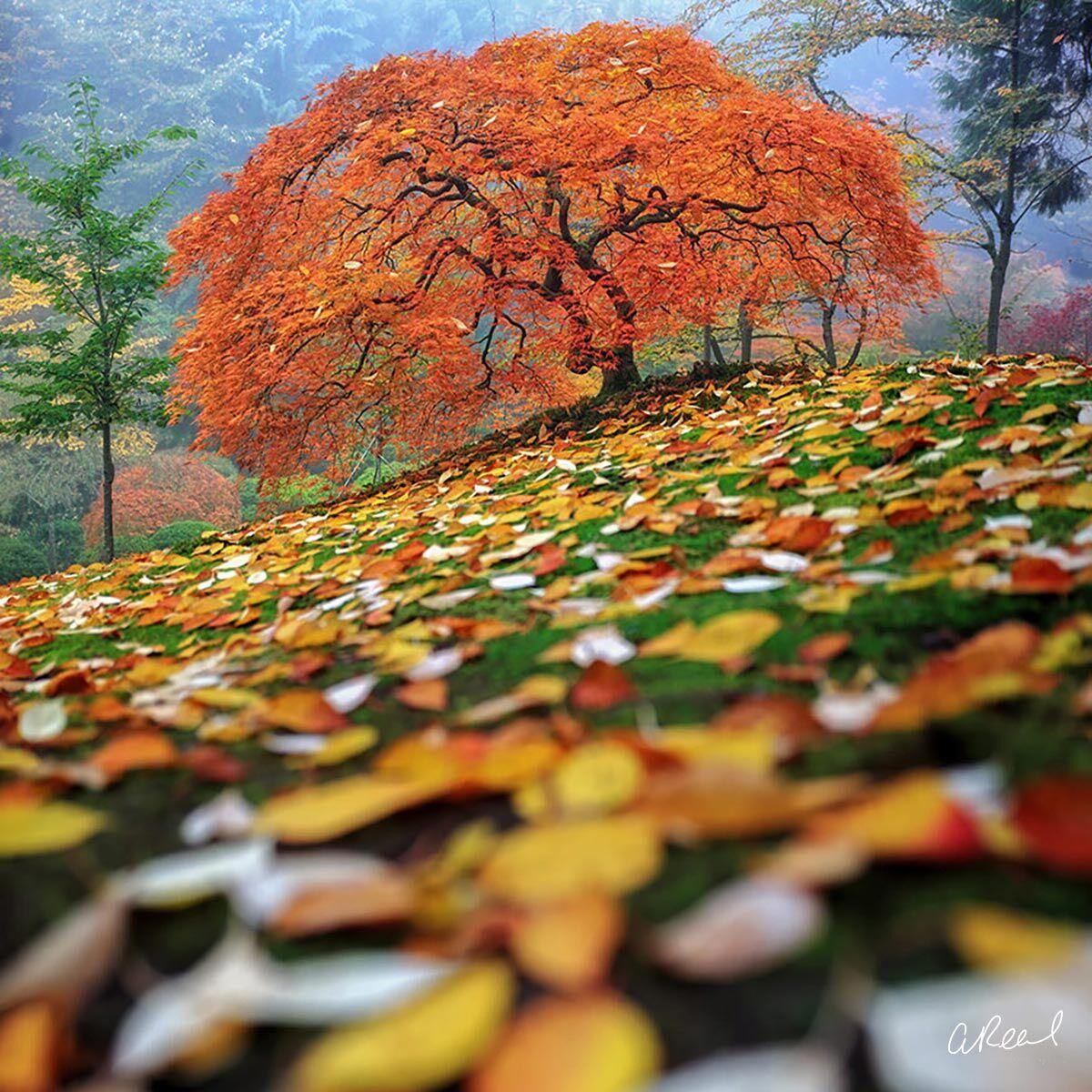Colorfall FujiFlex