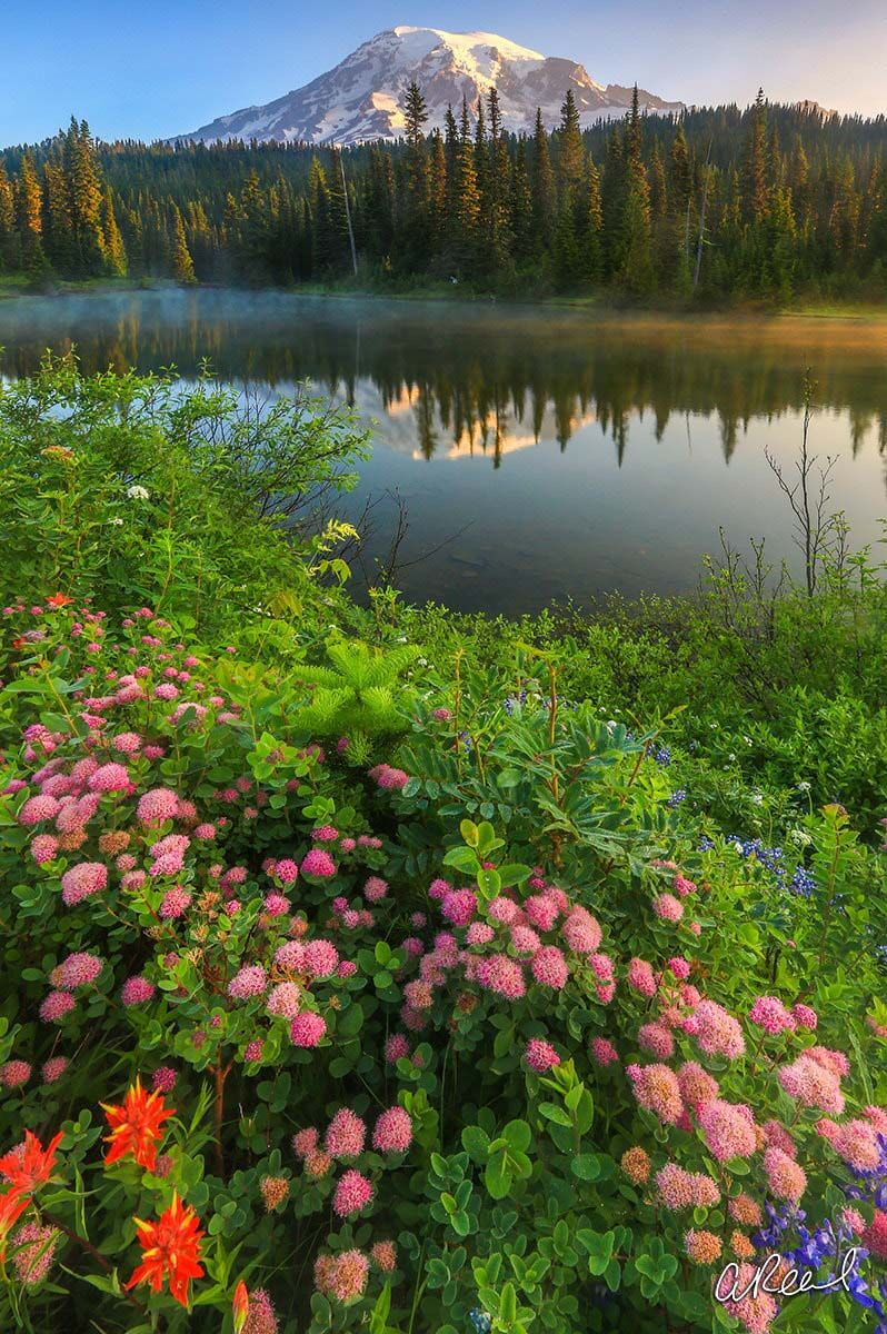 Summer Mornings Mt Rainier National Park Aaron Reed