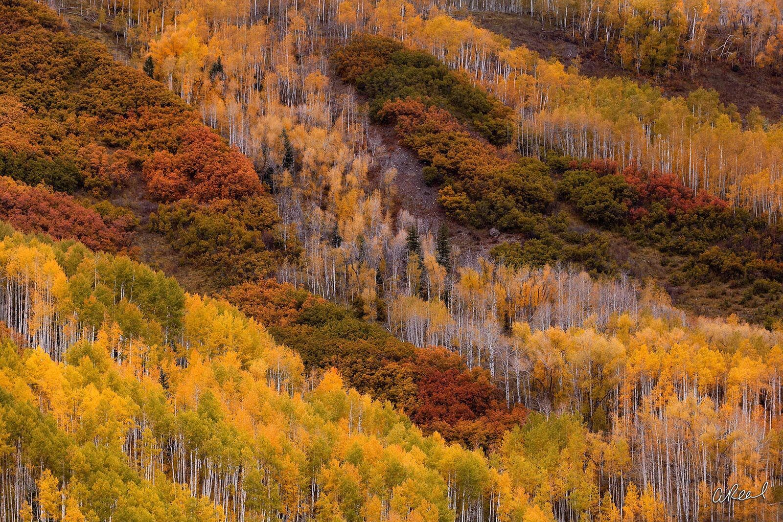 Telluride, Colorado, Gold, Aspen, Trees, Fine Art, Limited Edition, Town, River, abstract