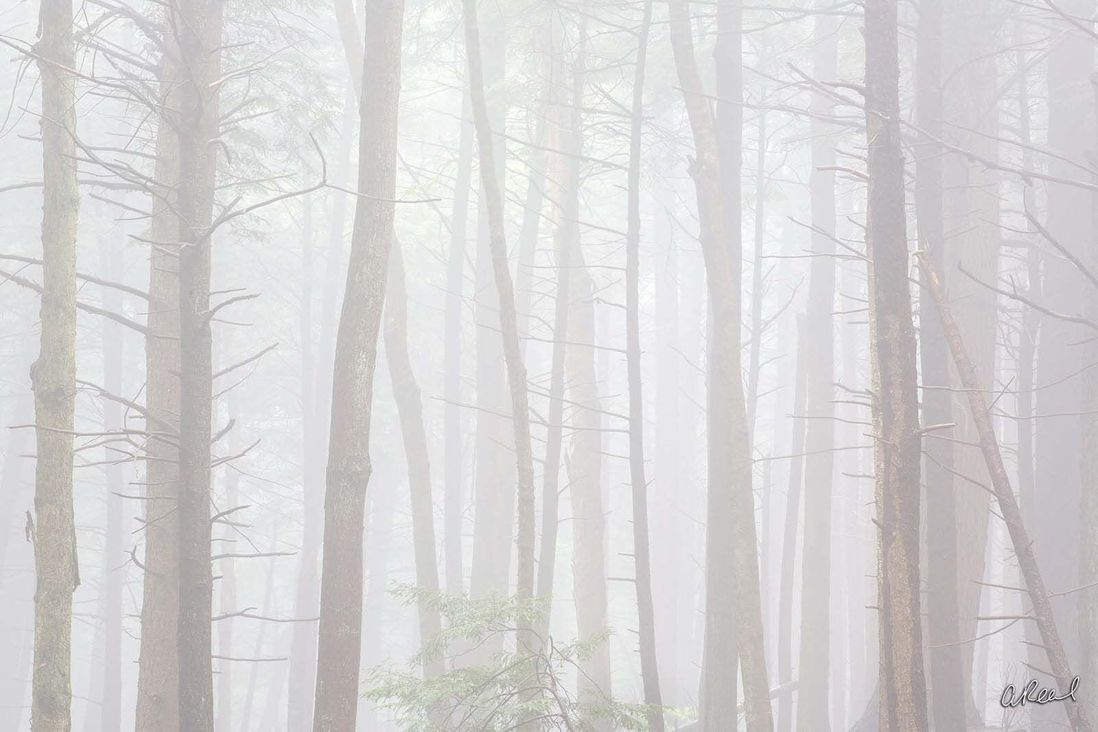 Fog, Trees, Hush, Fine Art, Limited Edition, , photo