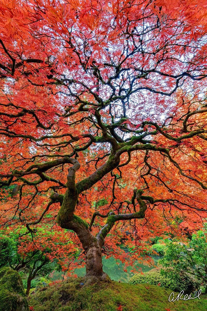 Fine Art, Portland, Oregon, Garden, Limited Edition, Spark, Branches, photo