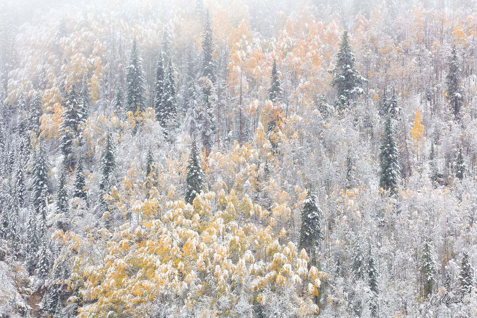 Transform your space with Aaron Reed's limited edition photography print, Winters Vail, from his Abstract Nature Photography...