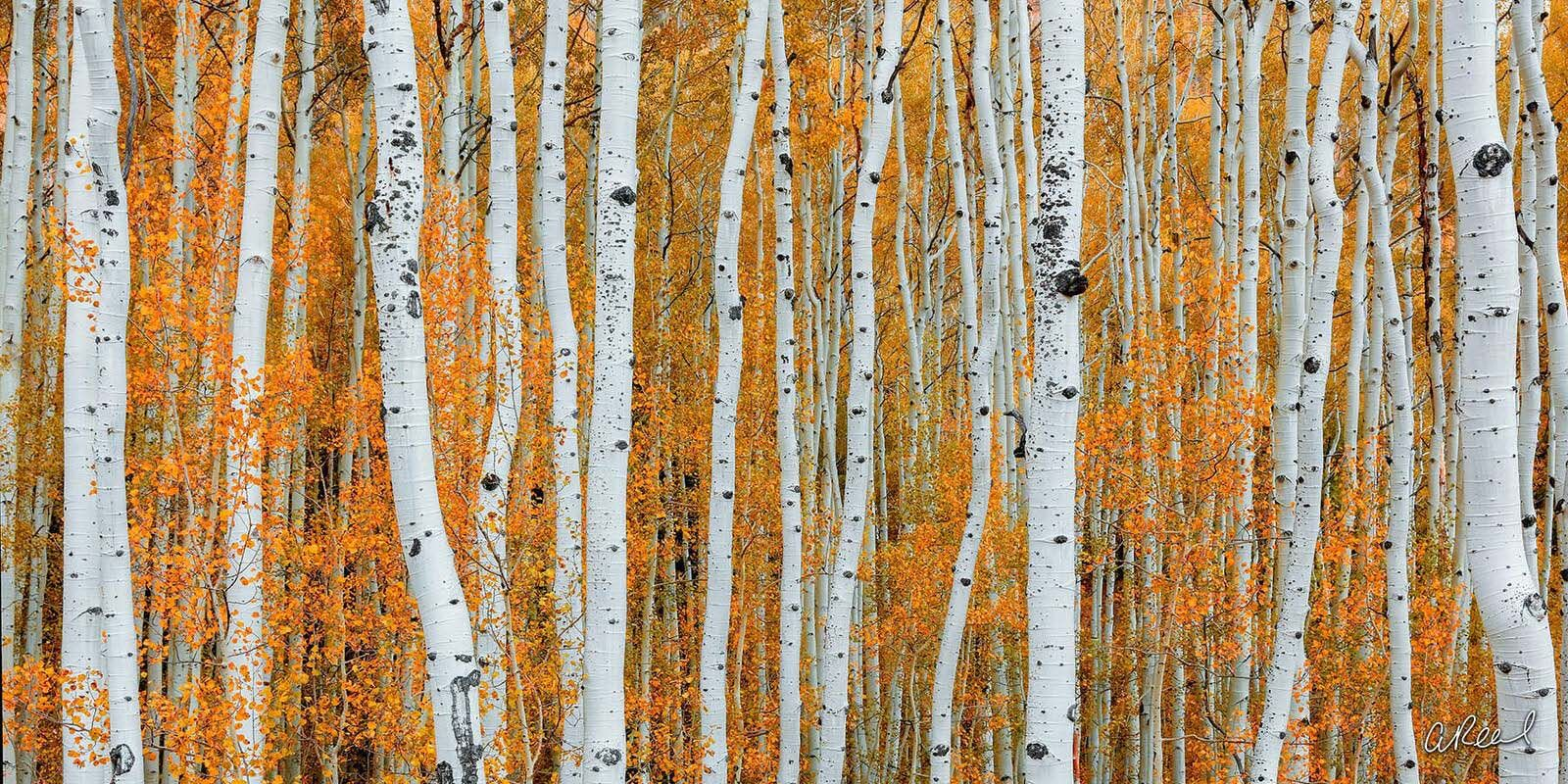 Transform your space with Aaron Reed's luxury fine art photography print, Orange Crush, from his Panoramic Wall Art collection...