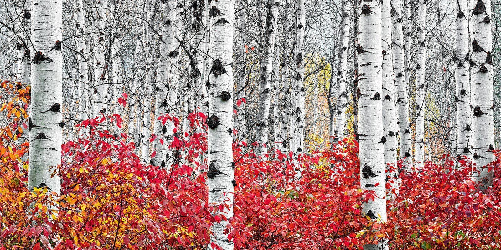 Transform your space with Aaron Reed's luxury fine art photography print, Flames, from his Panoramic Wall Art collection. Order...