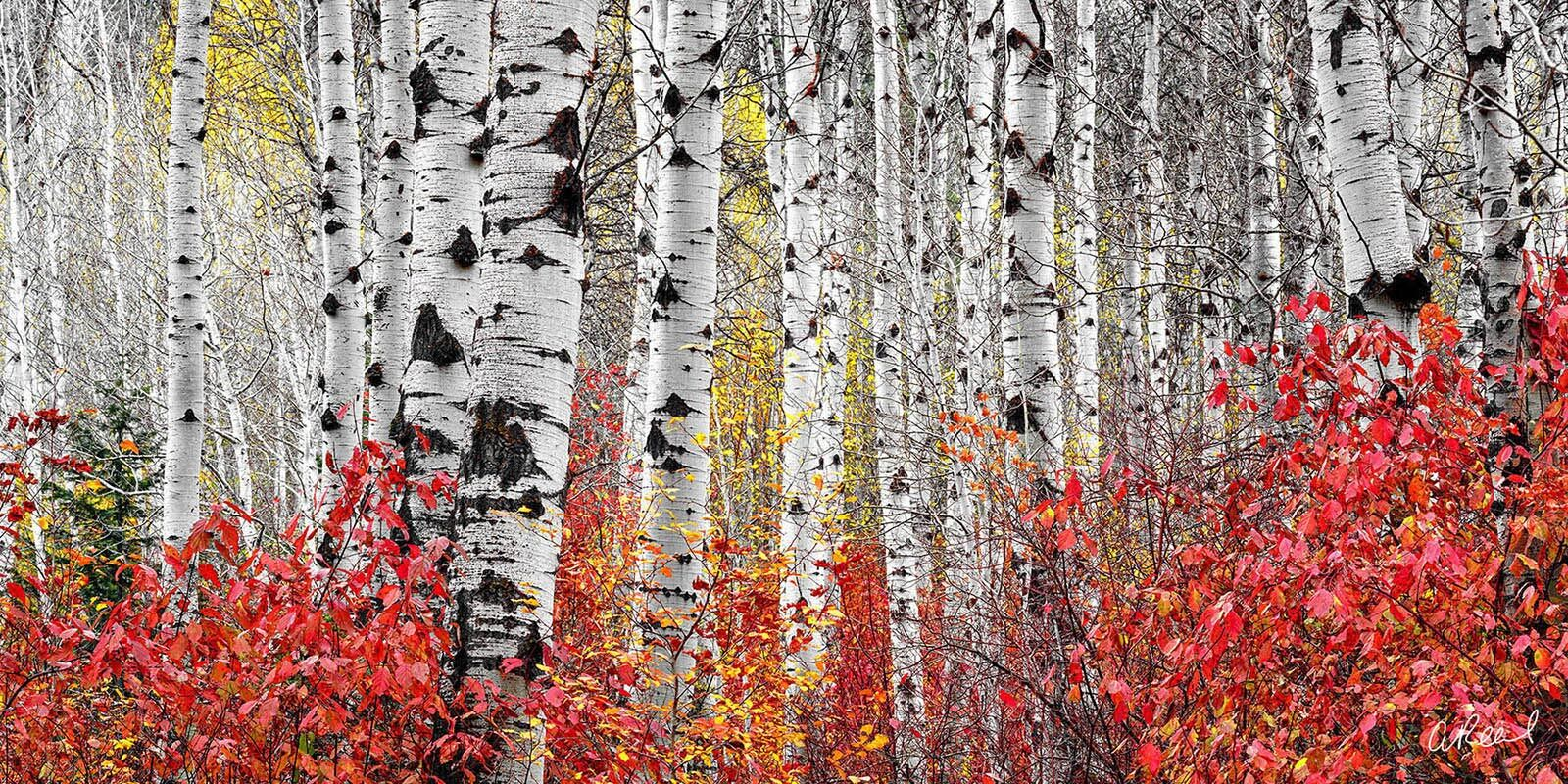 Transform your space with Aaron Reed's luxury fine art photography print, Fireflies, from his Panoramic Wall Art collection....