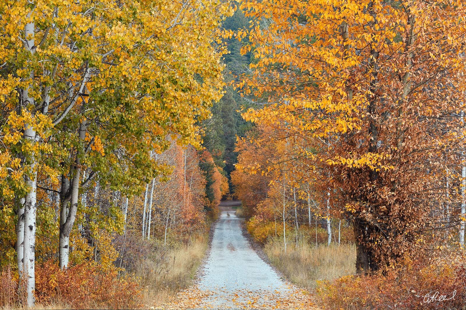 A photograph looking down a long country road with autumn trees and bushes on both sides.