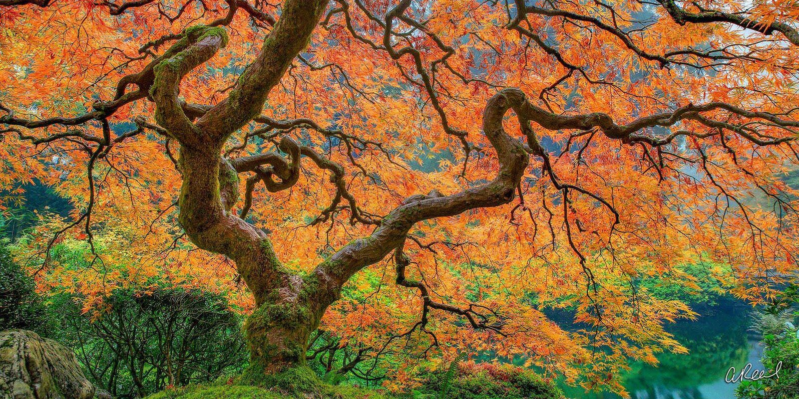 Transform your space with Aaron Reed's luxury fine art photography print, Believe In Magic, from his Panoramic Wall Art collection...