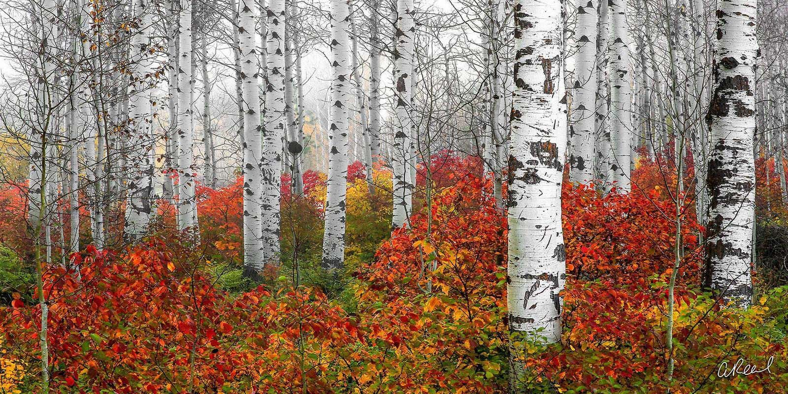 Transform your space with Aaron Reed's luxury fine art photography print, Echoes of Fall, from his Panoramic Wall Art collection...