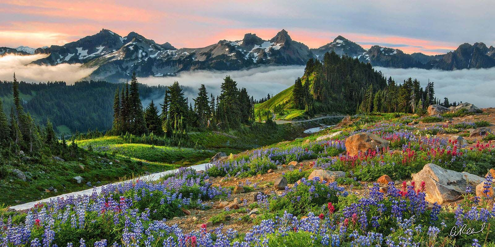 Transform your space with Aaron Reed's luxury fine art photography print, Eternal Beauty, from his Panoramic Wall Art collection...
