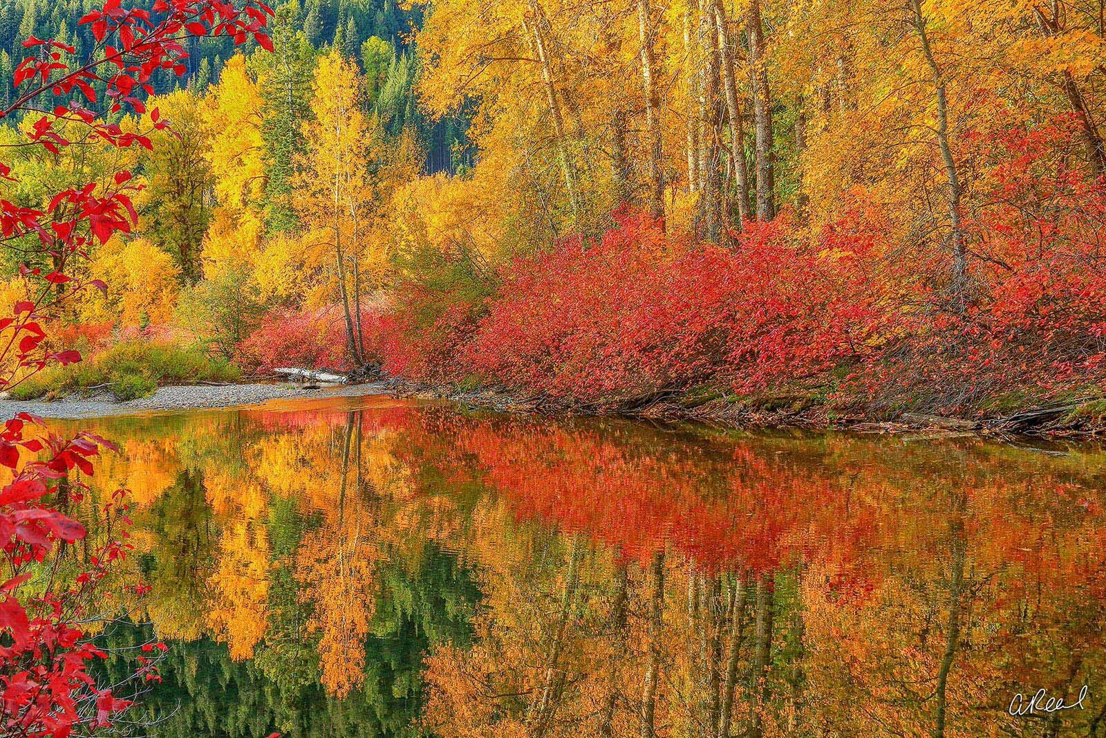 A photograph of red and yellow bushes and trees reflected in a slow moving stream.