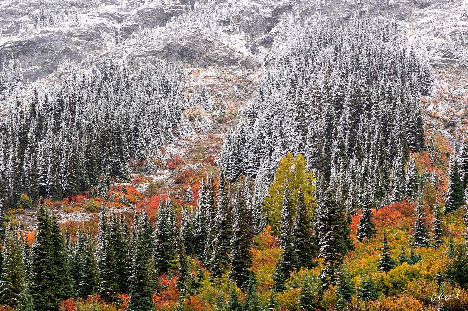 A photograph of a mountainside covered in snow during fall with red, yellow and orange trees and bushes mixed in.