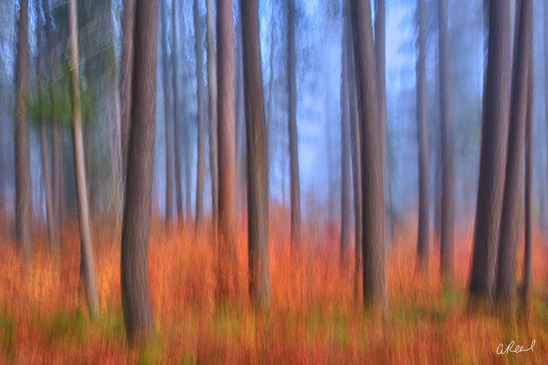 A blurred image of a forest of trees on a foggy morning.